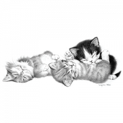 3 KITTENS SLEEPING
