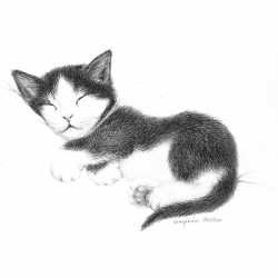 BW SLEEPING KITTEN