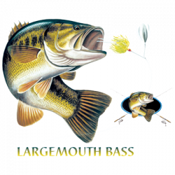 LARGEMOUTH BASS COMBINATION W/CREST