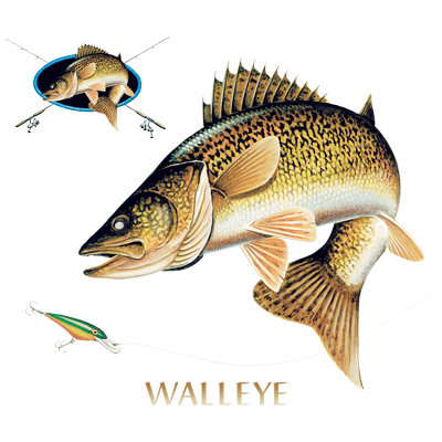 WALLEYE COMBINATION W/CREST