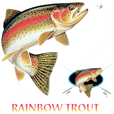 RAINBOW TROUT COMBINATION W/CREST