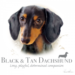 BLACK & TAN SHORTHAIR