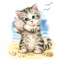 SEASHELL KITTEN