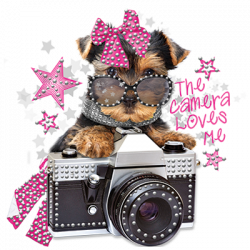 PUPPY CAMERA RHINESTONES