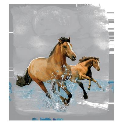 HORSE WILDERNESS