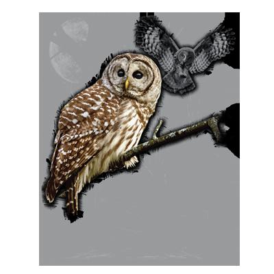 OWL WILDERNESS