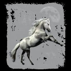 WHITE HORSE WILDERNESS