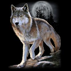 WOLF ALERT
