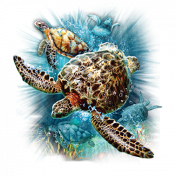 TURTLE KINGDOM II