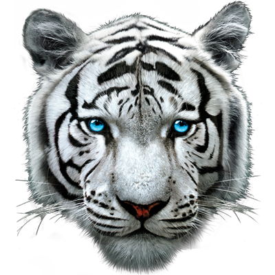 White Tiger Heat Transfers | T-shirt Transfers | Iron-on