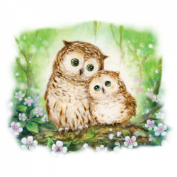 OWLS IN GREEN FOREST