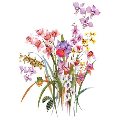 ORCHIDS AND FROGGIE