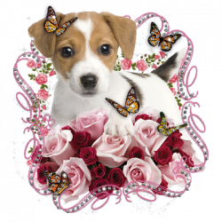 PUPPY ROSE RHINESTONES