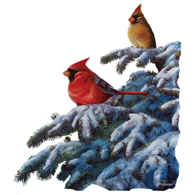 WINTER REFUGE - CARDINAL I