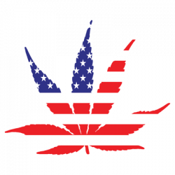 TEMP-AMERICAN POT LEAF