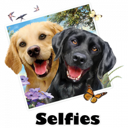 LAB DOGS SELFIE