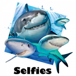 SHARKS SELFIE