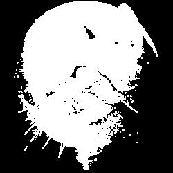 TEMP-CAT MOON