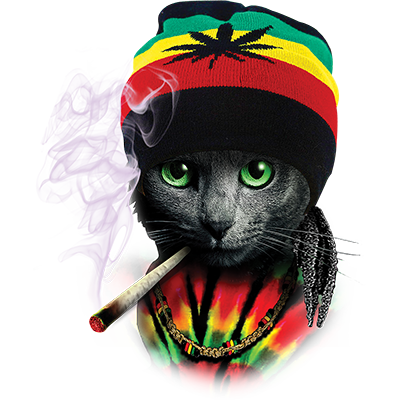Rasta Cat Heat Transfers T Shirt Transfers Iron On