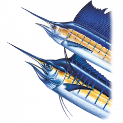 BIG HEAD MARLIN SAILFISH