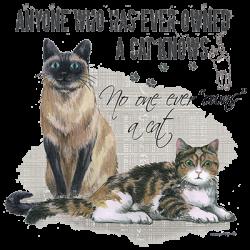 OWNS A CAT