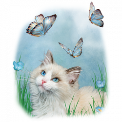 RAGDOLL AND BUTTERFLIES