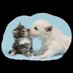 DOG KISSING CAT