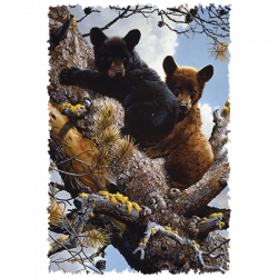 HIGH ADVENTURE BLACK BEAR CUBS